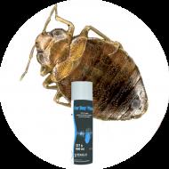 Insecticides punaises de lit