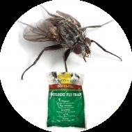 Piégeage et monitoring mouches