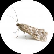 Luttes par Insectes auxiliaires