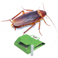 Piégeage et monitoring blattes