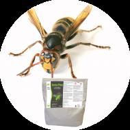 Insecticides guêpes et frelons