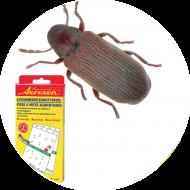 Piégeage et monitoring insectes denrées stockées