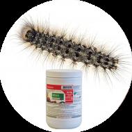 Insecticides chenilles défoliatrices